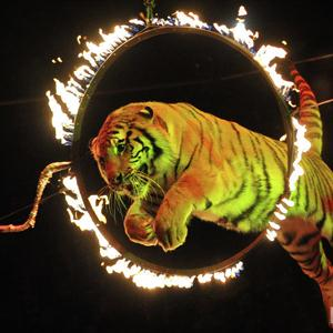 Цирки Каспийского